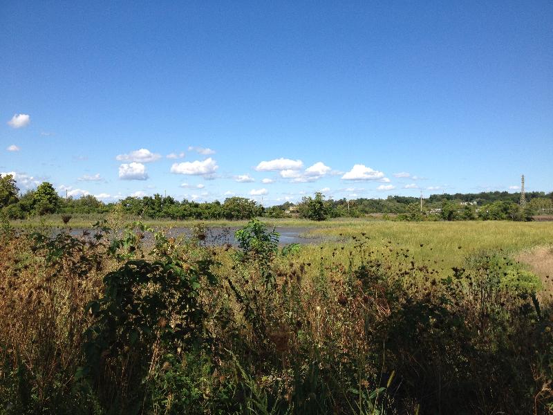 Alley Pond Environmental