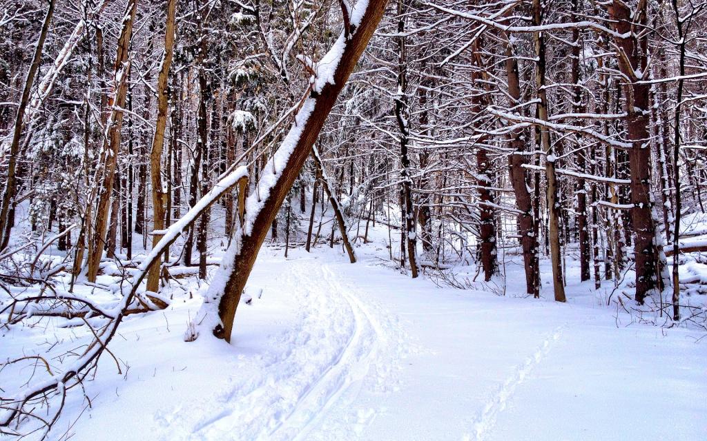SnowTraxx_1920x1200